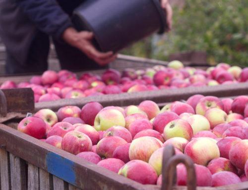 Obst richtig lagern!