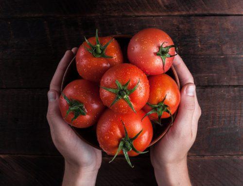 Tomaten – gesund oder giftig?