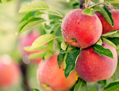 Der Apfel und seine gesunden Eigenschaften