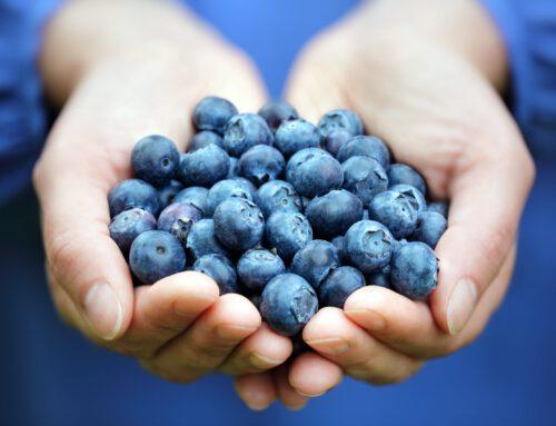 Wissenswertes über (Sommer) Beeren