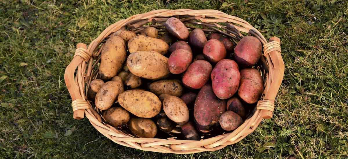 Bio Kartoffeln Biolandhof Keil